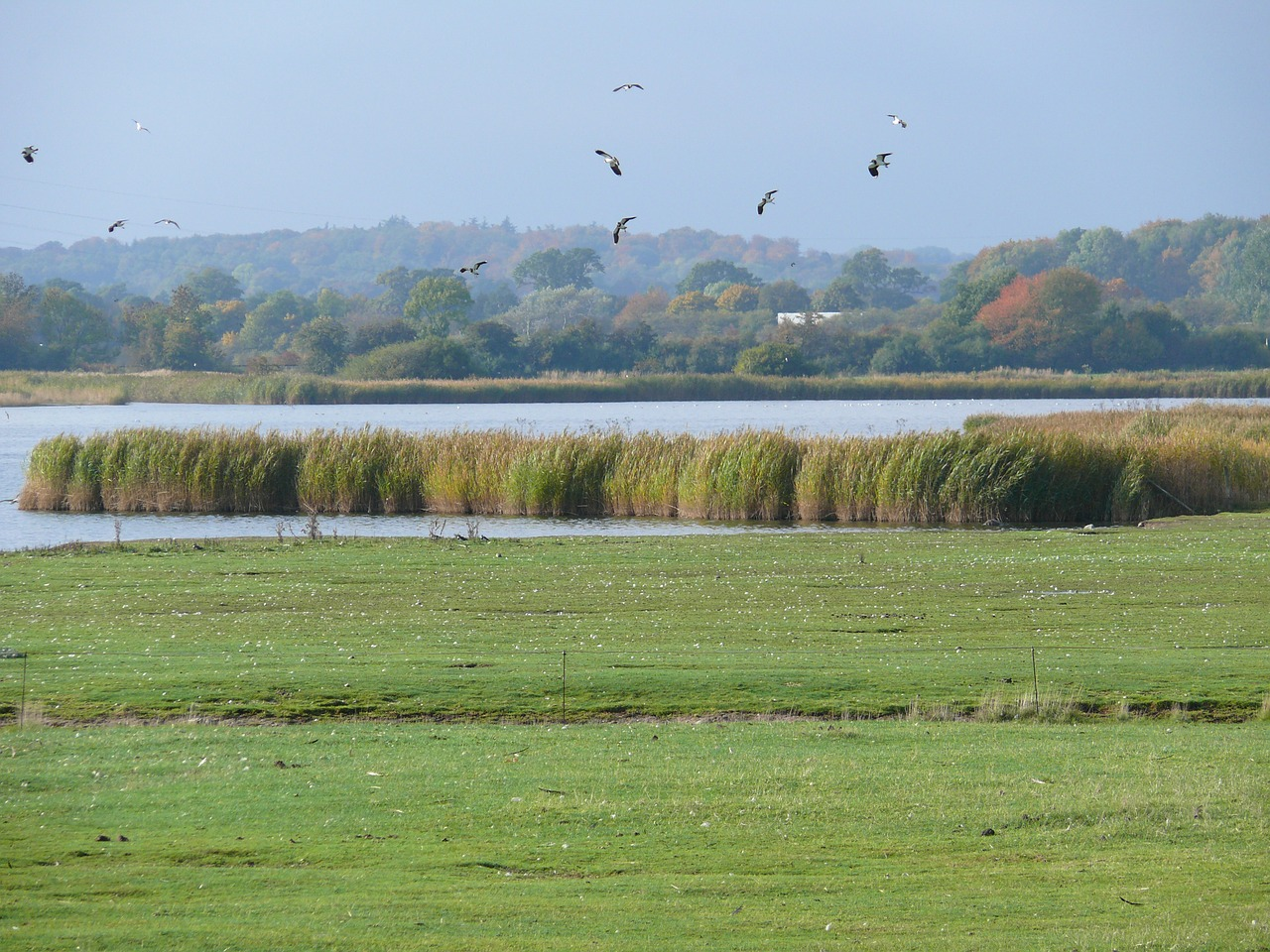 Estuary with reeds and seagulls