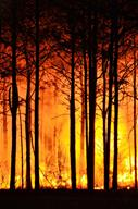 forest-fire-465617_1280